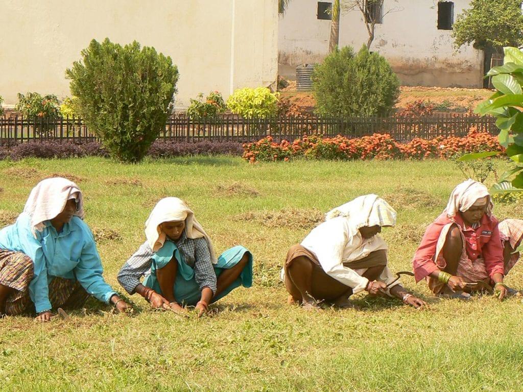 Goa, jardinières